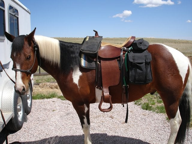Top 5 Best Horse Saddle Bags Reviews (2020 Updated) | Horse is Lo